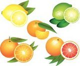 Mandarin Orange,Citrus Fruit,Tangerine,Leaf,Grapefruit,Freshness,Collection,Photo-Realism,Ilustration,Vitamin C,Clip Art,Cross Section,Slice,Lemon,Food,Healthcare And Medicine,Remote,Orange Color,Lime,Yellow,Fruit,Dieting,Vector,Vegetarian Food,Single Object,Set,Sour Taste,Green Color,Ripe,Juice,Orange - Fruit,Nature,Food And Drink,Eps10