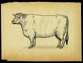 Livestock,Ilustration,Mammal,Farm,Hoofed Mammal,Animal,Domestic Animals,Animal Themes,Parchment,Domestic Life,Bull - Animal