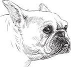 French Bulldog,Dog,Bulldog,Animal Head,Candid,Portrait,Sketch,Pug,Pets,Animal Nose,Snout,Domestic Animals,Drawing - Art Product,Purebred Dog,Frog Dog,Mammal,Ilustration,Isolated On White,Lap Dog,Boston Terrier,Animal Ear,Terrier