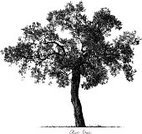 Olive Tree,Sketch,Olive,Tree,Leaf,Italy,Fruit,Food,Symbol,Rural Scene,Computer Icon,Organic,Lifestyles,Ilustration,Vector,Tree Trunk,Mediterranean Culture,Computer Graphic,Field,Branch,Grass,Outdoors,Landscape,Landscaped,Agriculture,Retro Revival,Cultures,Isolated,Greece,Healthy Lifestyle,Healthy Eating,Wood - Material,Biological Culture,Oil Industry,Plant,Old-fashioned,Vegetable Garden,Old,Season,Nature,Green Color