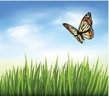 Sun,Sky,Butterfly - Insect,Plant,Backgrounds,Green Color,Grass