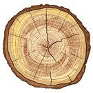 Log,Tree Trunk,Wood - Material,Tree,Slice,Textured,Cross Section,Firewood,Circle,Bark,Lumber Industry,Timber,Oak Tree,Deciduous Tree,Pine,Single Object,Close-up,Isolated,Oak,Material,History,Plant,Pine Tree,Aging Process,Brown,Cracked,Yellow,Backgrounds,Nature,Stability,Dried Plant,White,Old