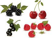 Raspberry,Lingonberry,Berry Fruit,Cherry,Vector,Blackberry,Black Color,Red,Leaf