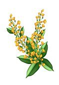 Gift,Myanmar,Drawing - Activity,Bouquet,Summer,Luxury,Love,Elegance,Nature,Romance,Tropical Climate,Yellow,Wedding,Tree,Branch,Flower Head,Plant,Gift Flower,Cassia Fistula,Cinnamon,Thailand,Ayurveda,padauk,Hanging,Papilionoideae,fistula,Stem,Decoration,Petal,Ornate,Floral Pattern,Botany,East Asian Culture,Ilustration,Anniversary,Abstract,Twig