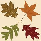 Leaf,Autumn,Oak Tree,Season,Green Color,Nature,Springtime,Vector,Brown,Ilustration,Computer Graphic,Sweet Gum Tree,Red,Plants,Time,Nature,Illustrations And Vector Art,Concepts And Ideas