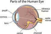 Eyeball,Cornea,Diagram,Anatomy,Cross Section,Biology,Humor,Using Senses,Information Sign,Science,Looking,Technology,Education,Choroid,vitreous,Vehicle Part,People,White Background,Men,Single Object