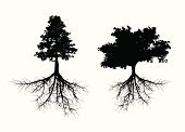 Root,Tree,Silhouette,Vector,Fir Tree,Branch,Isolated,Coniferous Tree,Ilustration,Leaf,Plant,Black Color,Cut Out,Nature
