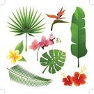 Frangipani,Silhouette,Palm Tree,Tropical Climate,Leaf,Plant,Coconut Palm Tree,Branch,Vector,Tree,Lush Foliage,bird-of-paradise,Set,Decoration,Nature,Hibiscus,Green Color,Climate,Botany,Painted Image,Frond,Philodendron,Orchid,Blossom,Single Flower,Design Element,Design,Summer,Isolated