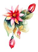 Flower,Plant,Flowering Plant,Flower Head,Watercolor Painting,Flower Arrangement,Ilustration,Painted Image