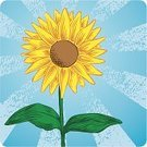 Sunflower,Woodcut,Etching,Flower,Single Flower,Pastel Drawing,Arts And Entertainment,Flowers,Visual Art,Nature,Glowing,Ornate,Backgrounds,Intricacy