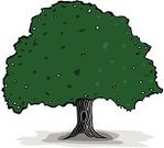 Oak Tree,Tree,Shade,Old,Vector,Evergreen Tree,Green Color,Illustrations And Vector Art,Black Color,Nature
