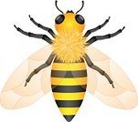 Honey,Bee,Symbol,Flying,Stinging,Honey Bee,Sting,Vector,Busy,Yellow,Efficiency,Fly,bumble,Gold Colored,Beehive,Animal,Nature,Ilustration,Striped,Insect,Drawing - Activity,Pollination,Wing,Pollen,Isolated,Gossip,Backgrounds,Manual Worker,Sweet Food,Wildlife,Shiny,Teamwork,Zoology