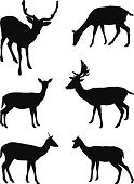 Deer,Venison,Forest,Silhouette,Hoofed Mammal,Trophy,Set,Animals In The Wild,Hunting,Doe,Ilustration,Black Color,Horned
