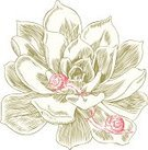 Succulent Plant,Woodcut,Ilustration,Snail,Flower,Single Flower,Plant,Leaf,Drawing - Art Product,Nature,Design Element,Clip Art,Retro Revival,Isolated,White Background,Vector,Engraved Image,Pencil Drawing