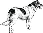 Drawing - Art Product,Black And White,Dog,Domestic Animals,Isolated Onwhite,Fur,Mammal,Purebred Dog,Pets,Sketch,Spotted,Tail
