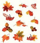 Autumn,Leaf,Falling,Frame,Backgrounds,Ilustration,October,Vector,Flower,Icon Set,Maple Tree,Art,Textured,Oak Tree,Tree,Design,Set,Silhouette,Rowan Tree,Space,White,Blank,September,Nature,Forest,Halloween,Birch Tree,Ornate,Plant,Collection,Isolated,Education,Rowanberry,Decoration,Season,Deciduous Tree,Chokeberry,Gold Colored,Yellow,Park - Man Made Space,Summer,Branch,Message