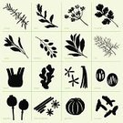 Cilantro,Nutmeg,Leaf,Vanilla,Plant,Sage,Spice,Herb,Fennel,Anise,Aromatherapy,Poppy,Ingredient,Cinnamon,Bay Of Water,Computer Graphic,Tasting,berberis,Set,Basil,Cooking,Organic,Turmeric,Ginger,garcinia,Collection,Seasoning,Food,Silhouette,Vector,Dill