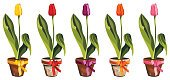 Tulip,Flower Pot,Potted Plant,Flower,Pink Color,Yellow,Vector,Springtime,clay pot,Purple,Ilustration,No People,Color Image,Orange Color,Nature,Illustrations And Vector Art,Flowers