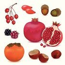 Pomegranate,Berry Fruit,Red,Composition,Nature,Colors,Fruit,Crop,October,Season,Multi Colored,Acorn,Harvesting,Autumn,September,November,Backdrop,Vector,Blackberry,Chestnut,Abstract,Backgrounds