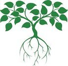 Tree,Root,Vine,Planting,Apple Tree,Growth,Symbol,Computer Icon,Learning,Vector,Nature,Cultivated,Leaf,Wisdom,Alternative Medicine,Organic,Crop,Innovation,Breaking New Ground,Seedling,Concepts,Ilustration,Branch,Investment,Sign,Gardening,Green Color,Environmental Conservation,Plant,Drawing - Art Product,Sparse,Success,Savings,Environment,Herb,Creativity,Simplicity,Education,Teaching,Research,illustrated,Abstract,Shape,Computer Graphic,Herbal Medicine