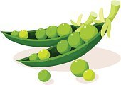Soybean,Clip Art,Color Image,Bean,Green Pea,Digitally Generated Image,Single Object,White Background,Vector,Ilustration