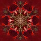 Red,Flower,Purple,Fractal,Transparent,Part Of,Plant,Decoration,Beautiful,Leaf,Floral Pattern,Ornate,Style,Kaleidoscope,Abstract,Ilustration,Drawing - Art Product,Painted Image,Mandala,Petal,Pattern,Black Color,Nature,Light - Natural Phenomenon,Magic,Internet,Development,Creativity,Red Wine,Paintings,Art Deco,Touching,Backgrounds,Computer Graphic,render