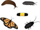 Slug,Caterpillar,Cockroach,Insect,Centipede,Crawling,Time,Insects,Animals And Pets,Concepts And Ideas,Butterfly - Insect,Outdoors