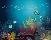 Coral,Underwater,Multi Colored,Fish,Nudibranch,Seaweed,Water,Reef,Silhouette,Vector,Animal,Animals In The Wild,School of Fish,Summer,Sea,Butterflyfish,Tropical Climate,Wildlife,Nature,Deep,Blue,Seascape,Cartoon,Ilustration