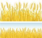 Wheat,Hay,Field,Cereal Plant,Crop,Straw,Vector,Agriculture,Grass Family,Ilustration,Plant,Cultivated,Gold Colored,Growth,No People,Yellow,Horizontal,Design Element,Horizon,Landscapes,Nature,Plants