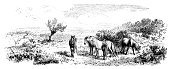 Horse,Panoramic,England,Animal,Landscape,Field,New Forest,Herd,Rural Scene,Horizontal,Landscape,Photography,Drawing - Art Product,Illustration,UK,Meadow,Engraved Image,Tree,Antique,No People,Drawing