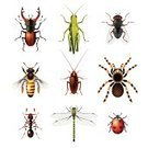 Cockroach,Ant,Dragonfly,Bee,Insect,Grasshopper,Collection,Animals In The Wild,Ladybug,Wildlife,Macro,Backgrounds,Isolated,White,Wasp,Animal,Stag Beetle,Yellow,Fly,Colors,Beetle,Spider,Nature,Close-up,Set,Wing