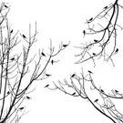 Bird,Silhouette,Back Lit,Tree,Branch,Forest,Vector,Sparrow,Common Blackbird,Dark,Flying,Abundance,Nature,Spooky,Horizontal,Backgrounds,Overcast,Ominous,Flock Of Birds,Design Element,Candid,Concepts And Ideas,Cloud - Sky,Large Group Of Animals,North American Blackbird,Non-Urban Scene,High Contrast,Black And White