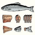 Salmon,Prepared Fish,Seafood,Cutting,Fillet,Ingredient,Raw Food,Conspiracy,Steak,Slice,Food,Sea Life Centre,Food And Drink,Redfish,Freshness,Preparation,Meal,Atlantic Ocean,Meat,fish head,Illustrations And Vector Art,Part Of,Old-fashioned,Salmon Steak,Fish Tail,No People,Vector,Instructions