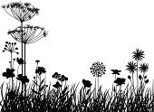 Silhouette,Flower,Dandelion,Grass,Plant,Floral Pattern,Poppy,Vector,Botany,Growth,Natural Pattern,Nature,Leaf,Herb,Flower Bed,Summer,Meadow,Springtime,Season,Chamomile Plant,Beauty In Nature,Ayurveda,Blossom