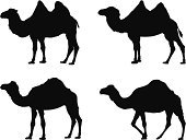 Silhouette,Camel,Domestic Animals,Mammal,Hoofed Mammal,Set,Animals In The Wild,Desert,Zoo,Safari Animals,Ilustration,Hump,Black Color,Wool