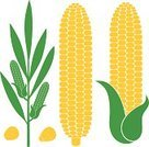 Corn - Crop,Symbol,Corn On The Cob,Vector,Food,Sign,Biological Culture,Cereal Plant,Isolated,Design Element,Stem,Harvesting,Yellow,Agriculture,Ripe,Crop