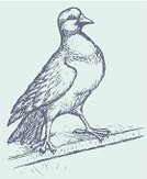 Ink,Bird,Sketch,Drawing - Activity,Pencil Drawing,Sign,Street,Zoology,Ilustration,Animals In The Wild,Feather,Drawing - Art Product,Pigeon,City,Engraving,Computer Graphic,Gray,Wildlife,Standing,Wing,municipal,Nature,Outline,Bird Watching,Candid,Town,Silhouette,Symbol,Animal,Poultry,Urban Scene,Domestic Animals,Dove - Bird,Engraved Image,Pencil,Symbols Of Peace,Contour Drawing,Biology,Vector,stay,Monochrome,hand drawn,City Life,Environment