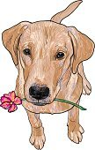 Dog,Sketch,Portrait,Sitting,Canine,Holding,Retriever,Animal Hair,Purebred Dog,Flower,Eps10,Isolated,Mammal,Labrador Retriever,Yellow,Ilustration,Happiness,Front View,Domestic Animals,Animal,Pets,Vector,Gold Colored,Young Animal,Puppy,Cute
