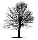 Tree,Silhouette,Black Color,Birch Tree,White,Vector,Branch,Cut Out,Formal Garden,Famous Place,Single Object,Wood - Material,Forest,Leaf,Springtime,Transparent,Woodland,Isolated,Land,Ilustration,Design,Tracing,Lone,Plants,Season,Life,Summer,Isolated Objects,Macro,Landscape,Nature,Illustrations And Vector Art,Stem,Contour Drawing,Nature,Lush Foliage,Park - Man Made Space,Backgrounds,Individual Event,Plant,Outline