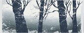 Forest,Spooky,Tree,Horror,Vector,Snow,Silhouette,Ethereal,Dirty,Fog,Art,Backgrounds,Grunge,Mist,Nature,Ilustration,Textured,Cold - Termperature,Plants,Nature,Illustrations And Vector Art,Textured Effect,Painted Image