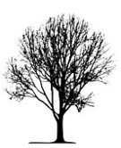 Tree,Birch Tree,Silhouette,Branch,Forest,Black Color,White,Single Object,Lone,Cut Out,Wood - Material,Individual Event,Backgrounds,Leaf,Outline,Nature,Plant,Vector,Woodland,Illustrations And Vector Art,Land,Contour Drawing,Tracing,Plants,Formal Garden,Isolated Objects,Lush Foliage,Famous Place,Park - Man Made Space,Macro,Summer,Isolated,Design,Life,Ilustration,Season,Springtime,Nature,Stem,Transparent,Landscape