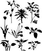 Tulip,Dandelion,Outline,Silhouette,Marijuana Plant,Plant,Flower,Chamomile,Grass,Lily,Violet,Hosta,Black Color,Herbal Medicine,Chamomile Plant,Leaf,Herb,Stem,Celandine,Nature,Isolated On White,Black And White,No People,Floral Pattern,Set,Design Element,Medium Group of Objects,Vertical