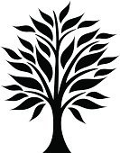 Leaf,Tree,Plant,Silhouette,Tree Trunk,Symbol,Branch,Season,Botany,Ayurveda,Vector,Growth,Nature