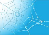 Spider Web,Internet,Design,Dew,Nature,Blue,Backgrounds,Drop,Netting,Computer Graphic,Woven,Global Communications,Focus On Background,Grid,Communication,Computers,Technology,Illustrations And Vector Art,Vector Backgrounds,Global Business,Vector,Ilustration,Catching,Concepts And Ideas