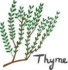 Thyme,Herb,Ilustration,Healthy Eating,Seasoning,Groceries,Beautiful,Drawing - Art Product,Food,italics,Ornate,Leaf,Text,Cool,Green Color,Plant,Identity,Freshness,Organic,Ingredient,Complexity,Handwriting