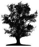 Tree,Silhouette,Vector,Black Color,Birch Tree,Wood - Material,Individual Event,Leaf,Forest,White,Single Object,Formal Garden,Lone,Landscape,Woodland,Outline,Isolated,Macro,Plant,Cut Out,Branch,Transparent,Park - Man Made Space,Tracing,Design,Illustrations And Vector Art,Summer,Lush Foliage,Life,Springtime,Isolated Objects,Contour Drawing,Plants,Ilustration,Famous Place,Stem,Season,Backgrounds,Nature,Land,Nature