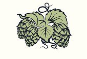 Hop,Crop,Beer - Alcohol,Brewery,Plant,Line Art,Leaf,Seed,Flower,Single Object,Ilustration,Season,Budweiser,Drink,Organic,Style,Alcohol,Design,Green Color,Design Professional,Herb,Bud,Decoration,Rural Scene,Nature,Freshness,Growth,Agriculture,Harvesting