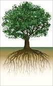 Tree,Growth,Day,tree roots,Nature,No People,Outdoors