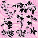 Wildflower,Maple Leaf,Maple Tree,Herbal Medicine,Black Color,Flower,Petunia,Silhouette,Branch,Pink Color,Plant,Herb,Wild Rose,Leaf,Nature,Grass,Swirl,Currant,Campanula,Set,Floral Pattern,Flower Bed,Growth,Bluebell,Bush,Botany,Part Of,Backgrounds,Beauty In Nature