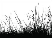 Grass,Silhouette,Black Color,Vector,White,Flower,Nature,Plant,Meadow,Frame,Backgrounds,Leaf,Autumn,Landscape,Black And White,Agriculture,Bush,Field,Abstract,Uncultivated,Ilustration,Seed,Herb,Drawing - Art Product,Design,Summer,Rural Scene,Growth,Horizon,Outdoors,Shadow,Pencil Drawing,No People,White Background,Lawn,Painted Image,Paintings,Season,Isolated,Lush Foliage,Image,Horizon Over Land,Focus on Shadow,Part Of,Tracing,Nature,Plants,Illustrations And Vector Art